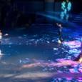 SeaWorld ~ Shamu's Christms Show